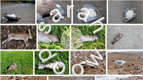 Dead animals by Sarah Doow at Shutterstock