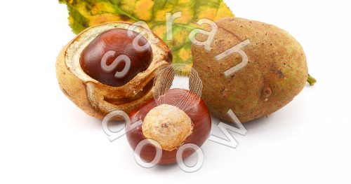 Red horse chestnut conkers and leaves - stock photos