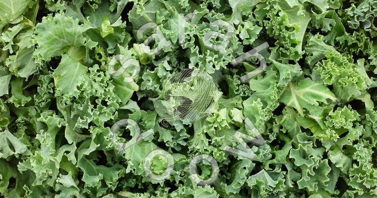 Shredded kale – Society6 collection