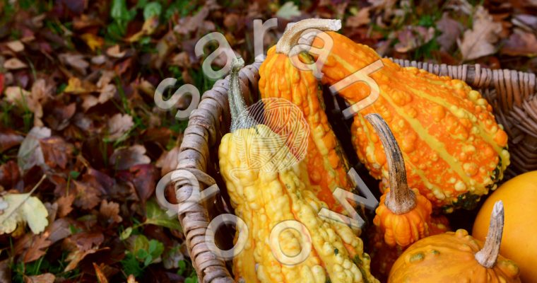 Basket of ornamental gourds – Society6 collection