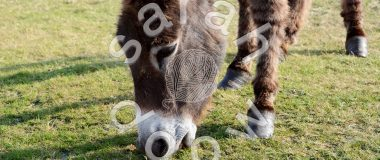 Society6 New Forest donkey collection