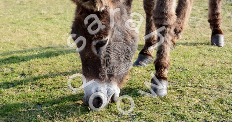 New Forest donkey – Society6 collection