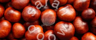 Society6 red conkers collection