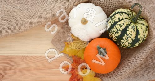 Society6 fall gourds collection