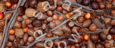 Society6 Festive nuts and spices collection